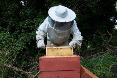 Subvenciones anticipadas para el ejercicio 2019 del Gobierno de Canarias destinadas a la mejora de la producción y comercialización de los productos de apicultura en Canarias
