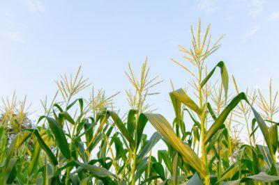 Subvenciones a inversiones materiales o inmateriales en transformación, comercialización y desarrollo de productos agrarios