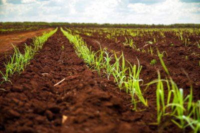 Subvenciones a la cooperación para el suministro sostenible de biomasa en el marco del Programa Nacional de Desarrollo Rural 2014-2020