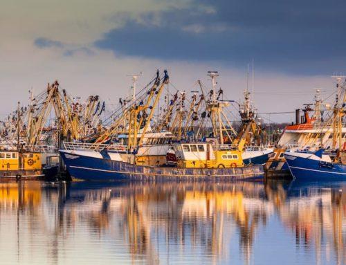 Ayudas destinadas a la renovación de la flota pesquera de Canarias